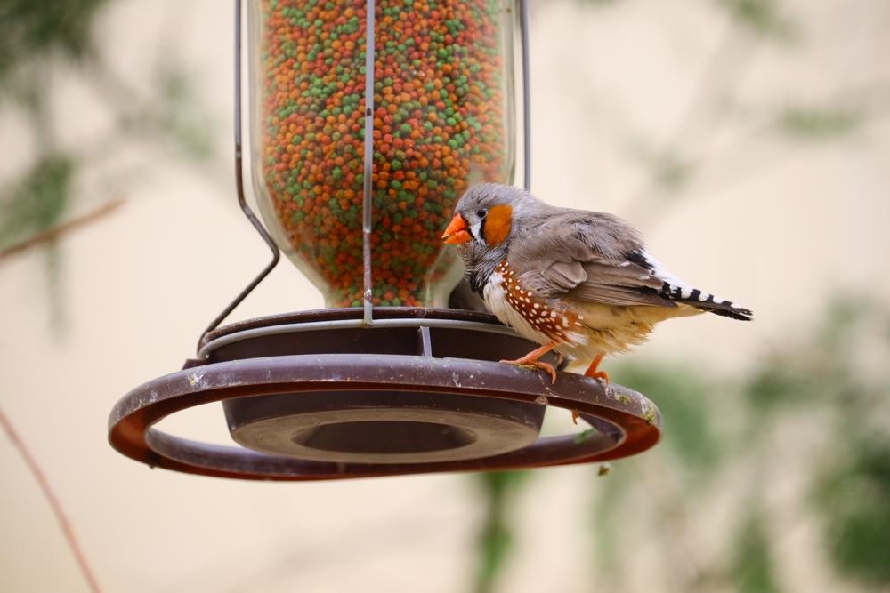 """Akcja ekologiczna – """"Dokarmiamy ptaki zimą"""""""